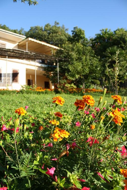 Apartments Basan Lovran-Opatija, holiday home in Kvarner garden